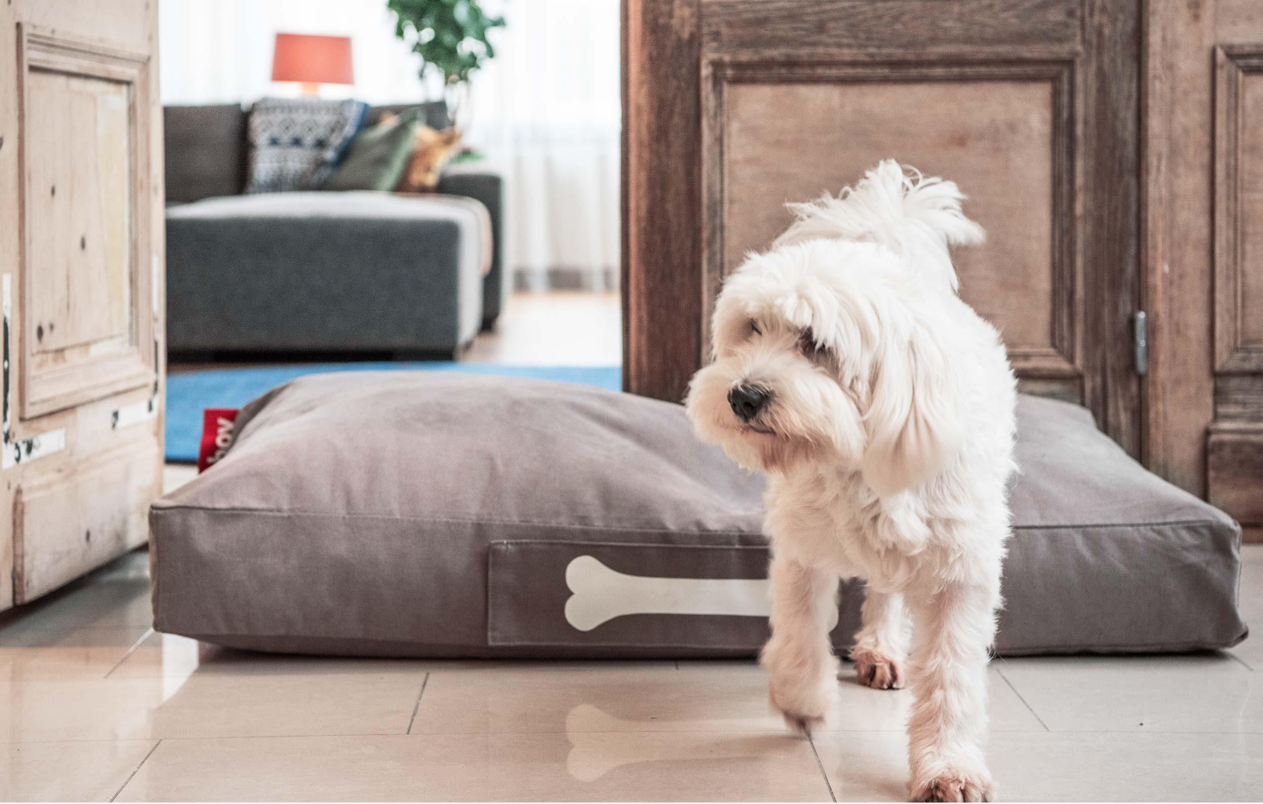 le doggielounge pour le plaisir ultime de votre chien fatboy. Black Bedroom Furniture Sets. Home Design Ideas